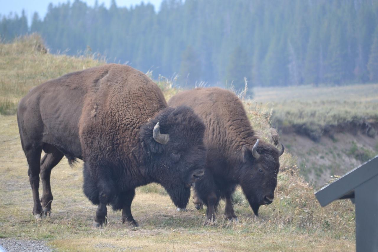Una bellissima coppia a sud del parco di Yellowstone