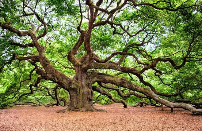 oak-tree-2018822_960_720